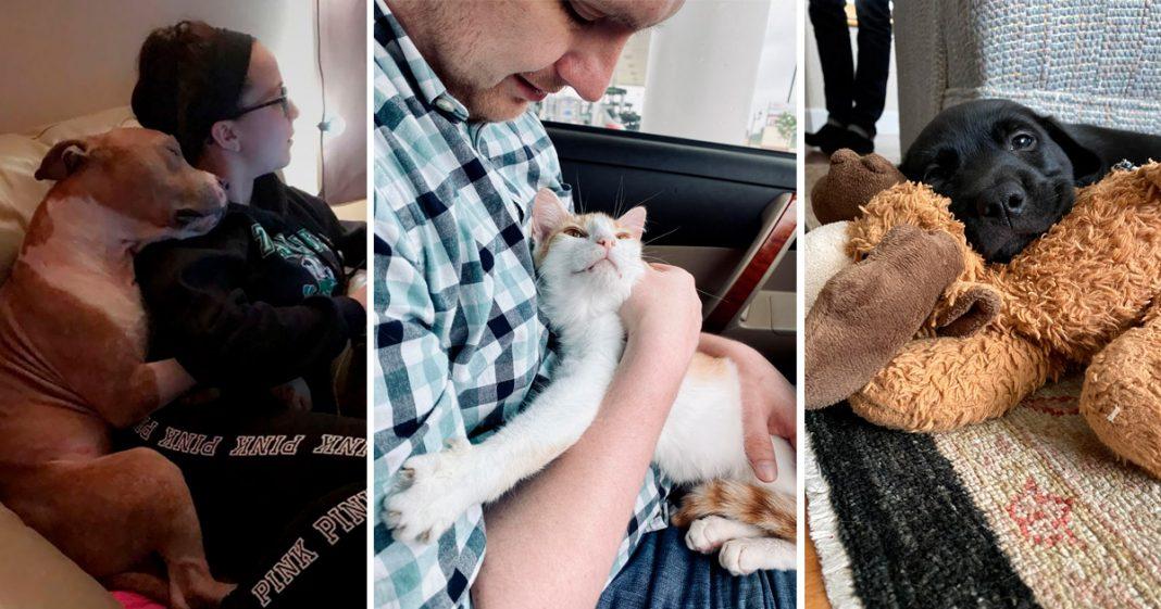 transformação de animais adotados