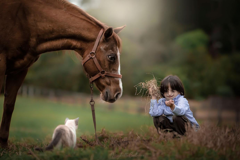 menino ao lado cavalo campo