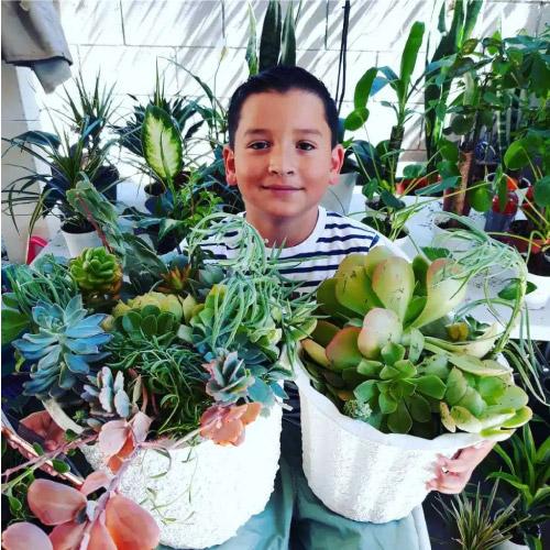 aaron mostra plantas