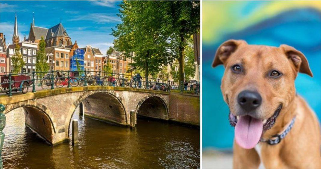 Holanda bate recorde e é o primeiro país sem nenhum cão de rua abandonado 1