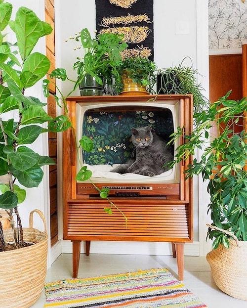 caminhas de gato vintage 1