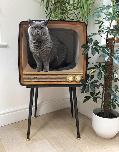 caminhas de gato vintage 2