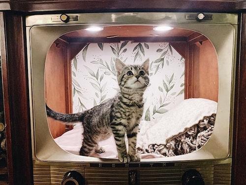 caminhas de gato vintage 7