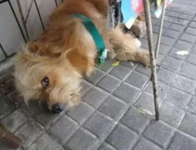 cão deitado calçada rua
