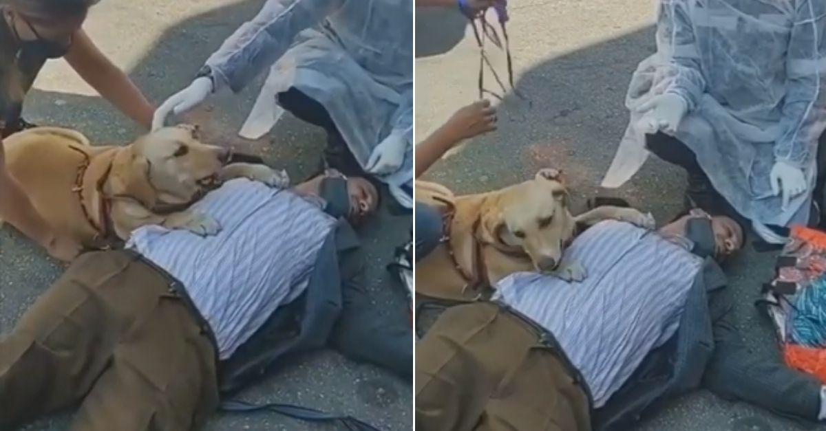 Cachorrinha não sai do lado de dono cego que desmaiou; vídeo comovente viralizou 2