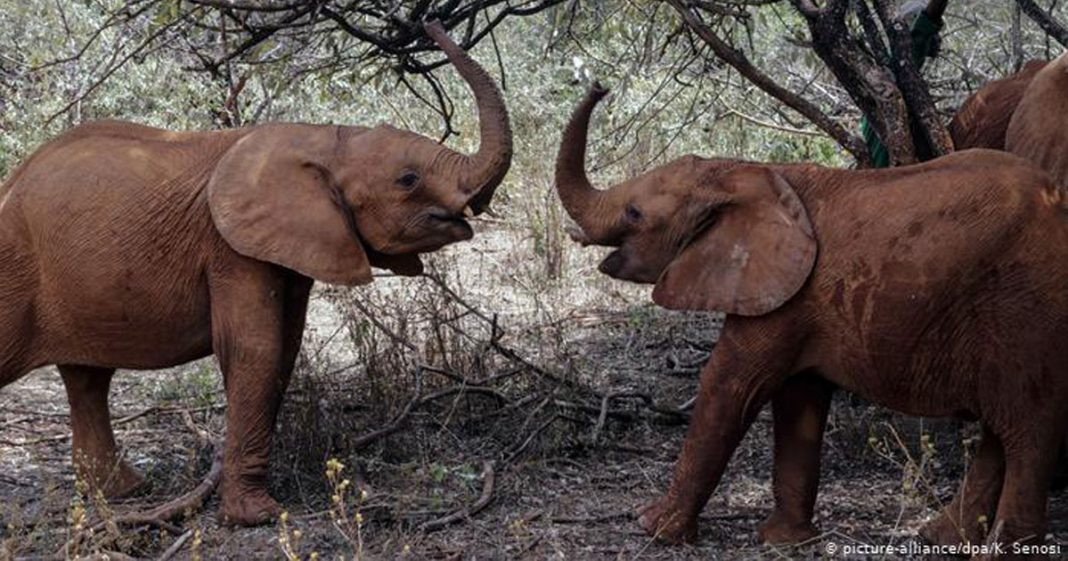 dois elefantes levantando tromba debaixo árvores