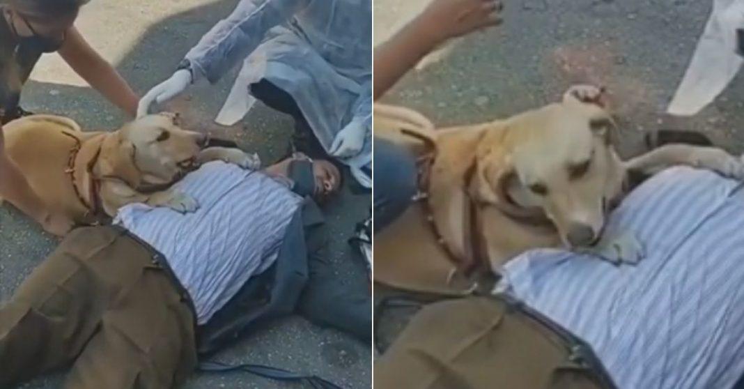 Cachorrinha não sai do lado de dono cego que desmaiou; vídeo comovente viralizou 4