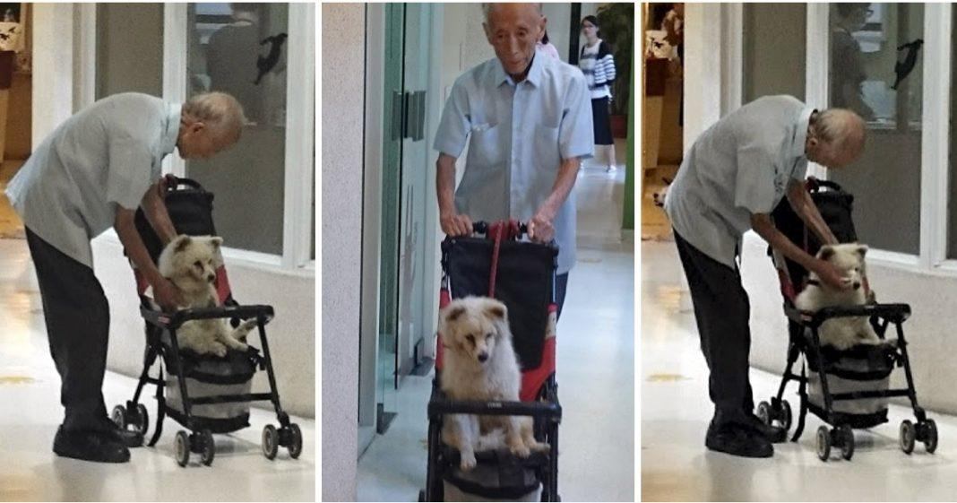idoso, cão e carrinho de bebê