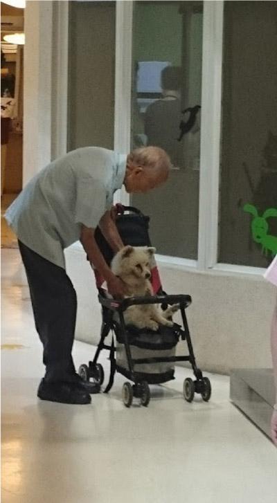 idoso cuidando do cachorro
