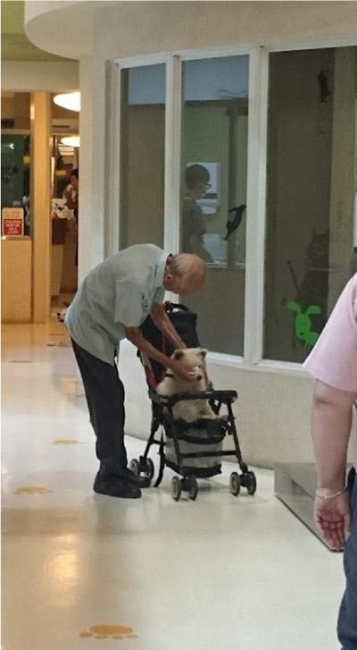 idoso e cachorro