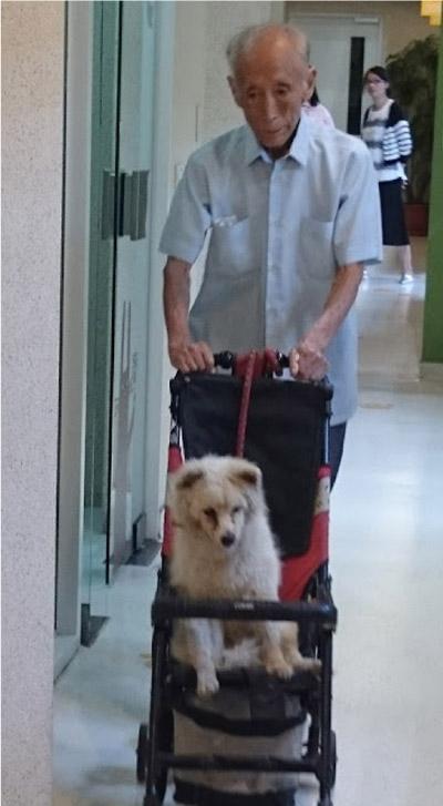 idoso empurrando cachorro em carrinho de bebê