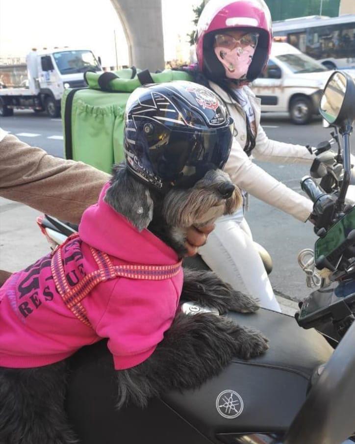 cadelinha em cima moto
