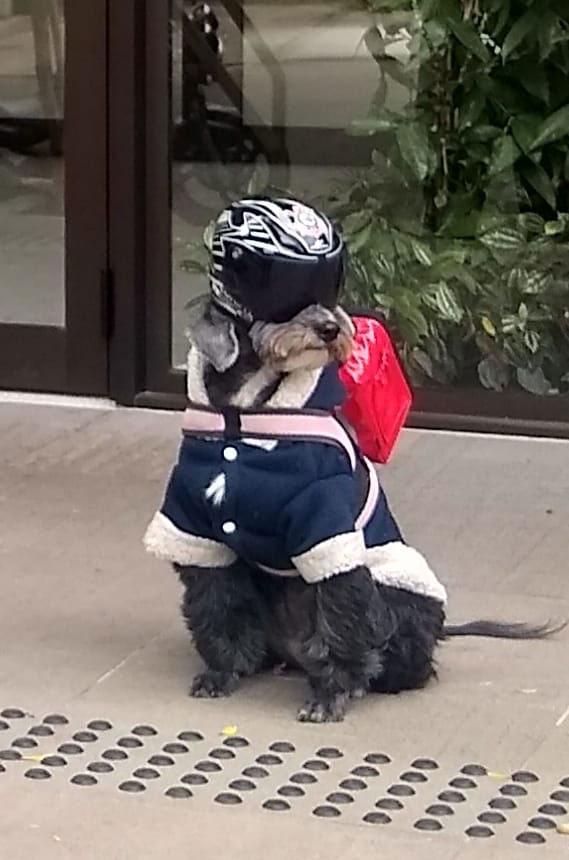 cadelinha usando capacete e bag entregador aplicativo