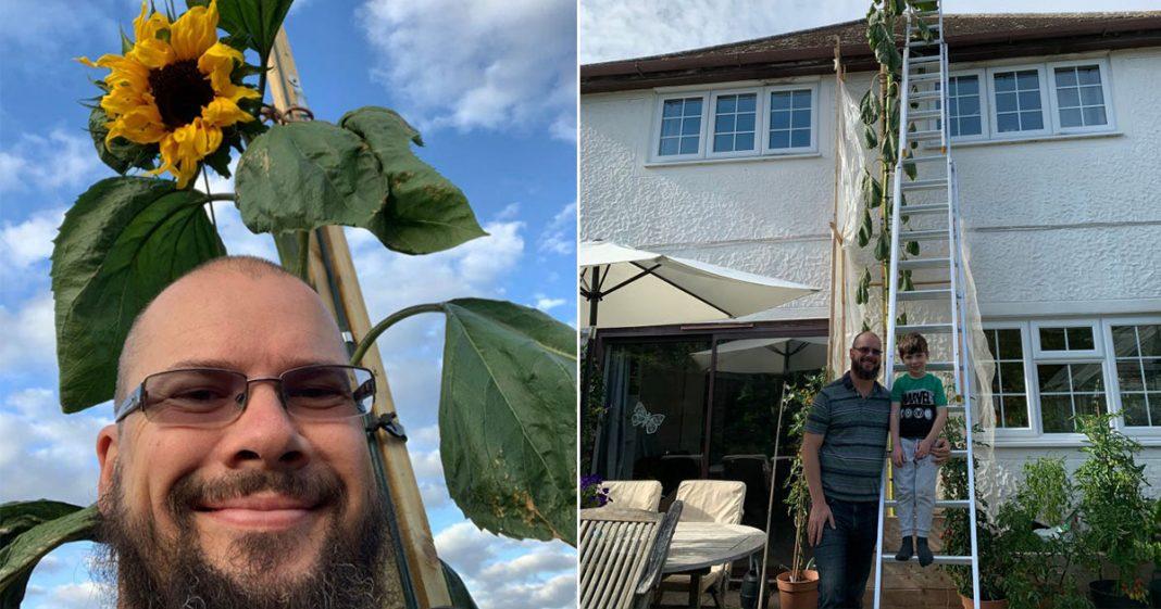 'Meu Pé de Girassol': pai cultiva girassol de 6 m e realiza desejo de filho de 4 anos 1