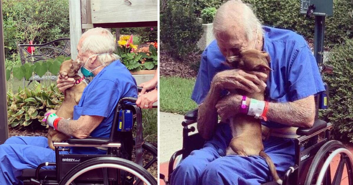 """Cachorrinha """"pede ajuda"""" e salva vida do seu dono de 86 anos. O reencontro deles é emocionante! 1"""