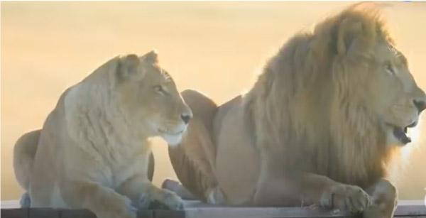 Tarzan e Tanya na África
