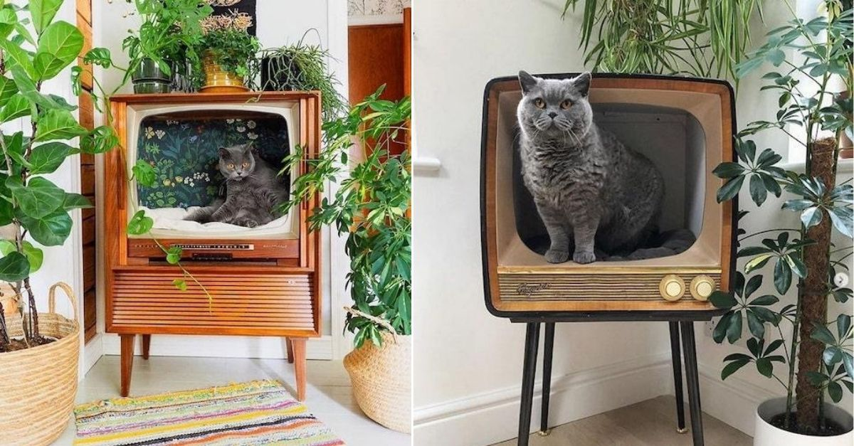 Pessoas estão transformando TVs vintage em incríveis casinhas de gato e nós estamos apaixonados 2