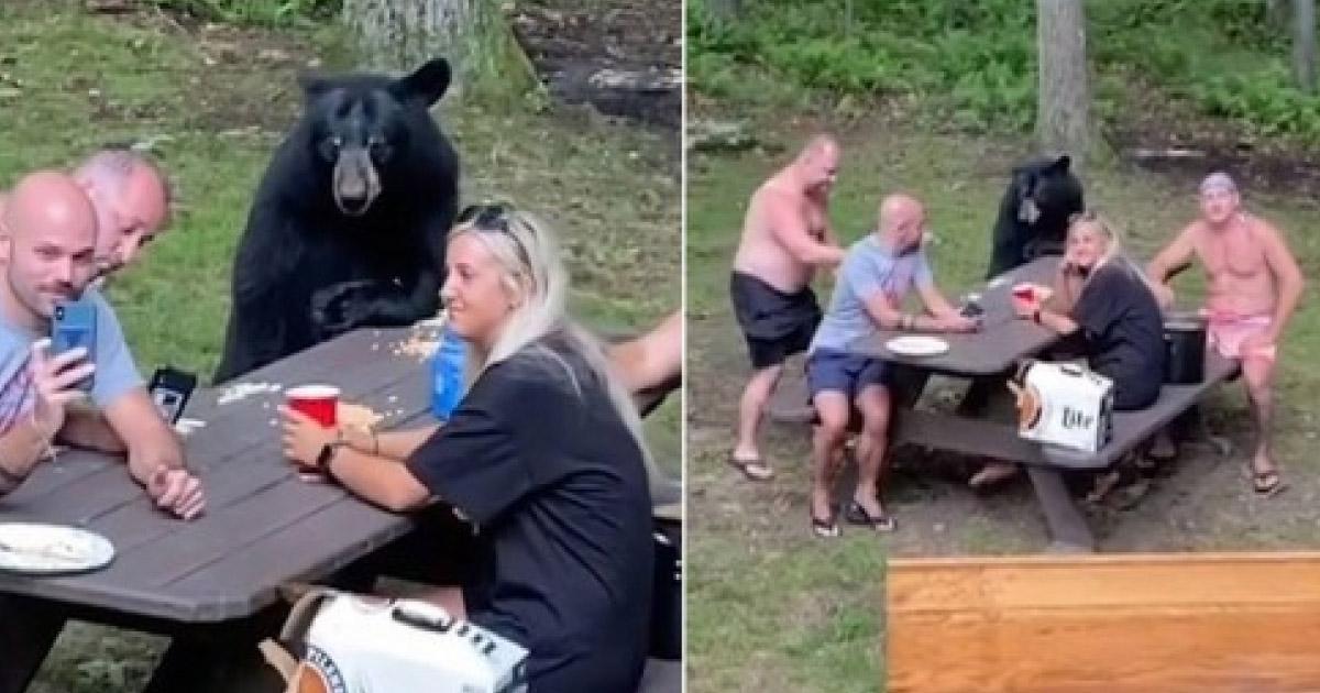 urso faz piquenique
