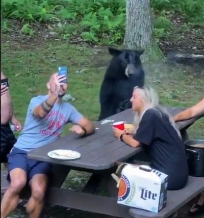 urso senta a mesa