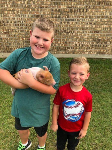 meninos segurando porquinha