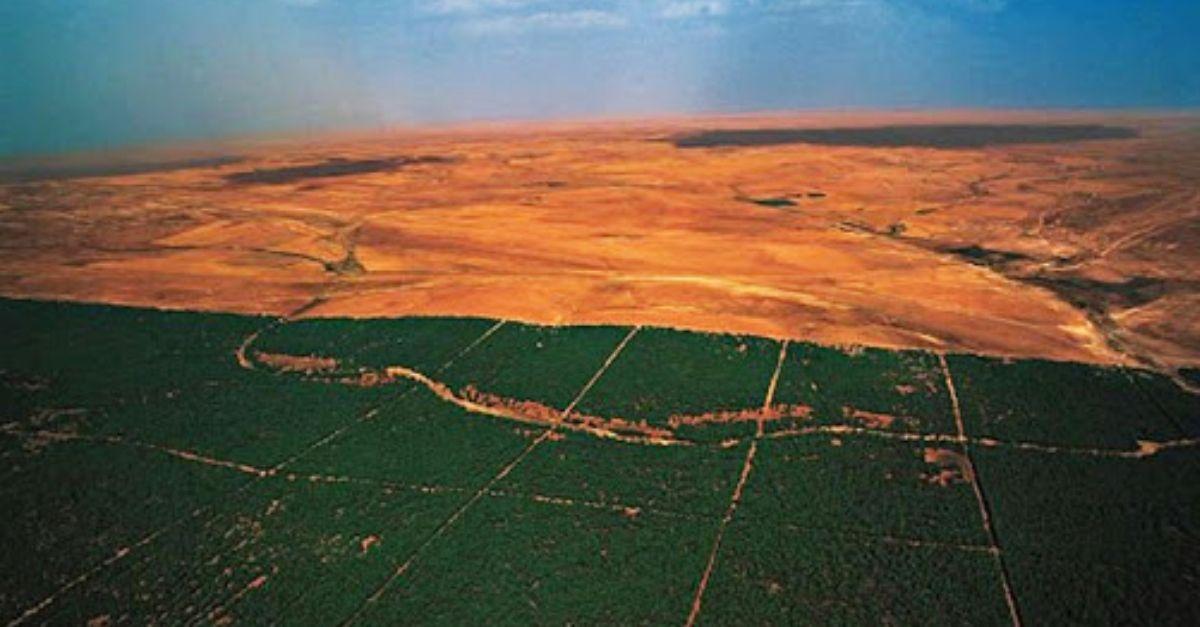 A Grande Muralha Verde da África: 8.000 km de árvores que prometem salvar o planeta do aquecimento global 2