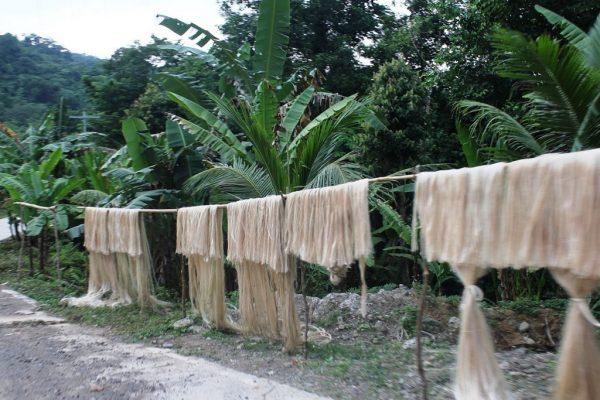 fibra do abacá