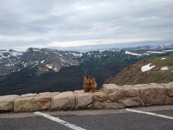 dois animais na estrada