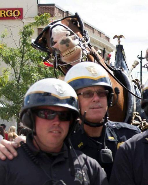 cavalo na foto de policiais
