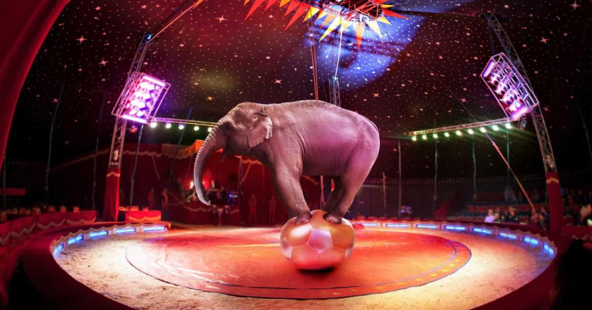 """França vai proibir o uso de animais selvagens em circos itinerantes e parques aquáticos. """"O começo de uma nova era"""" 1"""