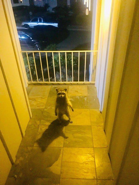 animal na porta