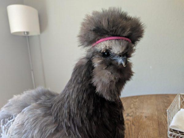animal com fica na cabeça