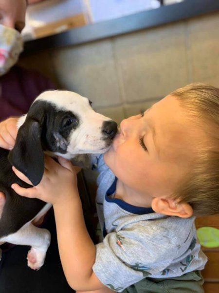 menino beijando cachorro