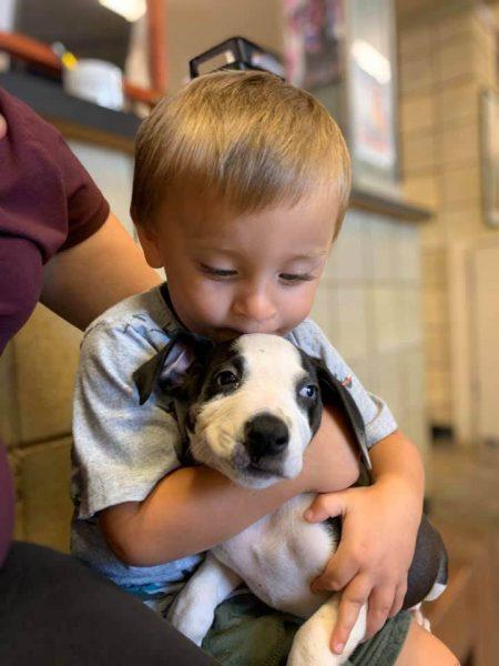 menino beijando cachorrinha