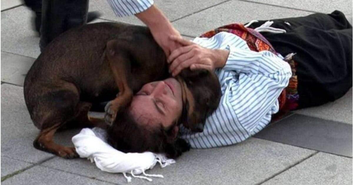 Cãozinho de rua interrompe peça de teatro para confortar ator que fingia estar ferido 2