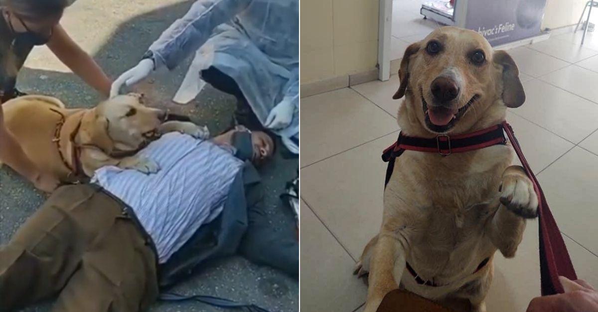 Deficiente visual e sua fiel cadela que não o abandonou após desmaio ganham R$ 175 mil em doações 1