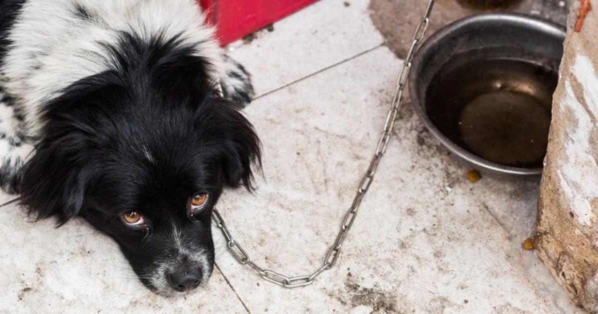 Nova lei aumenta pena para quem maltratar cães e gatos: 2 a 5 anos 1