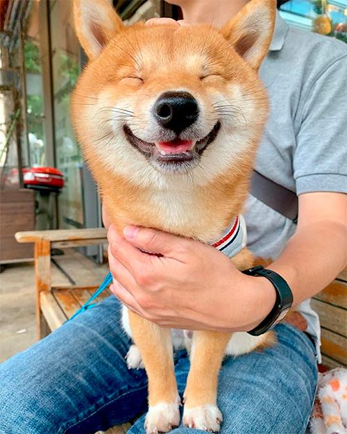 Maru é o cachorro mais sorridente do Instagram e essas fotos vão te provar isso 2