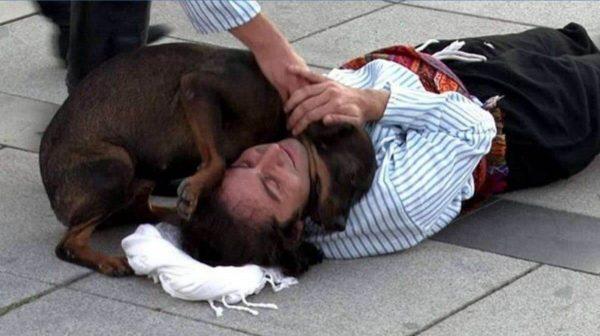 cachorro fazendo carinho no homem
