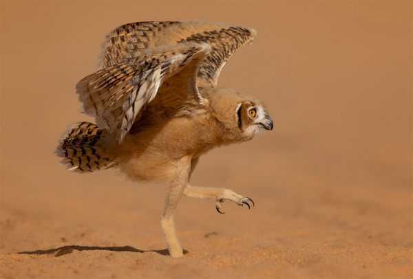 Comedy Wildlife Photography Awards