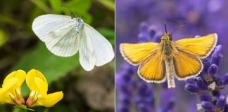 fotografo captura voo das borboletas