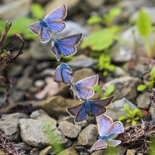 fotografo registra especies de borboletas 1