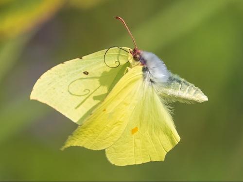 fotografo registra especies de borboletas 2