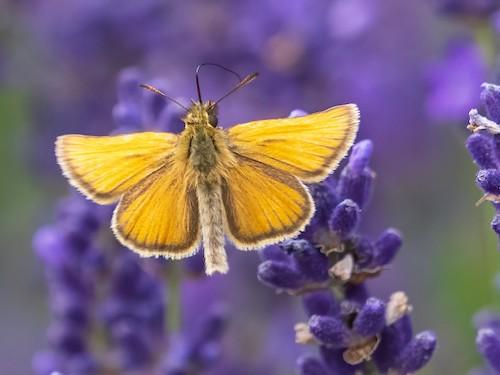 fotografo registra especies de borboletas 4