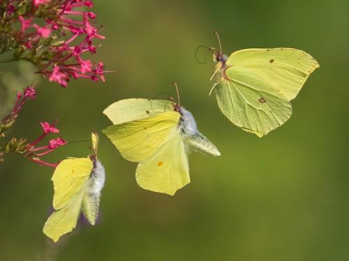 fotografo registra especies de borboletas 5