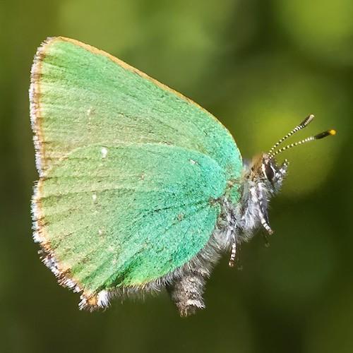 fotografo registra especies de borboletas 6