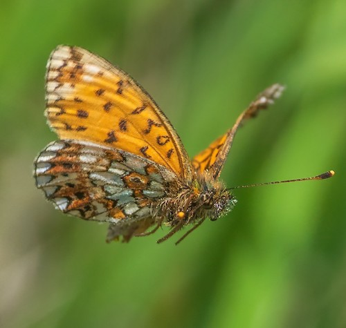 fotografo registra especies de borboletas 8