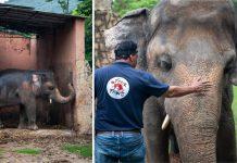 kaavan é solto após 35 anos em cativeiro