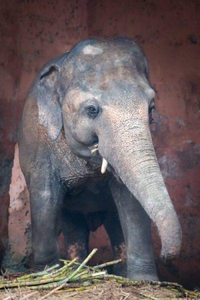 elefante mal cuidado