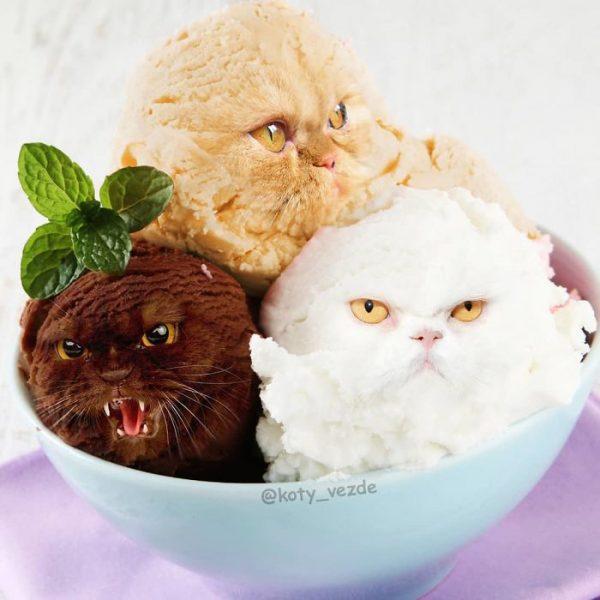 gatos Koty Vezde