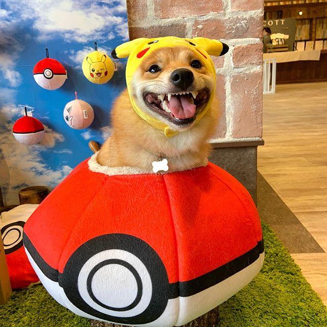 Maru é o cachorro mais sorridente do Instagram e essas fotos vão te provar isso 4